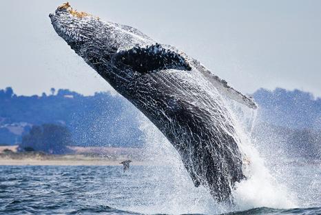 бывает ли у дельфинов и китов кессонная болезнь