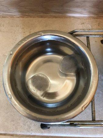 Можно ли коту добавлять лед в миску с водой?